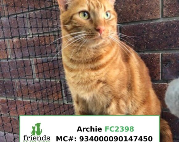 Archie (Adopted)