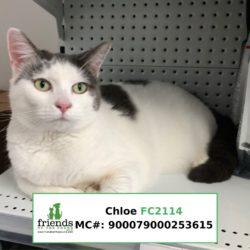 Chloe (Adopted)