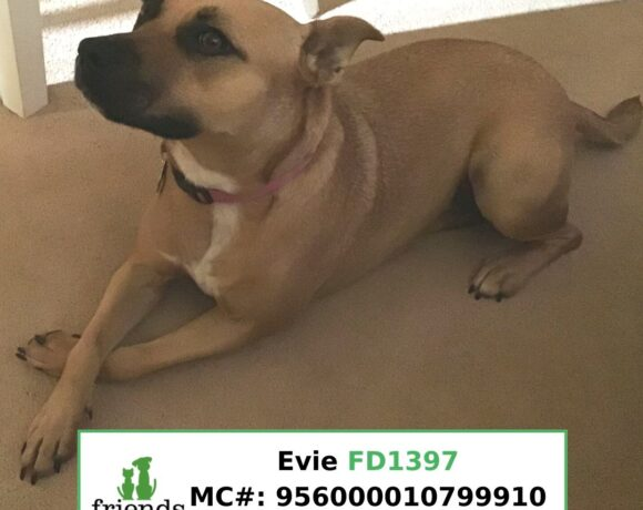 Evie (Adopted)
