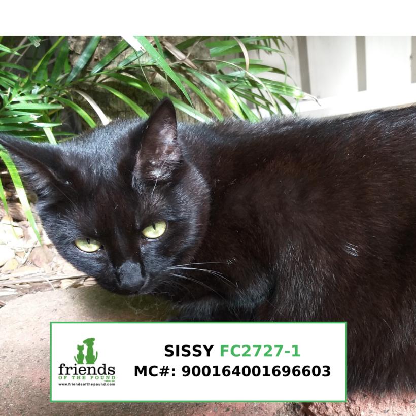 Sissy (Adopted)