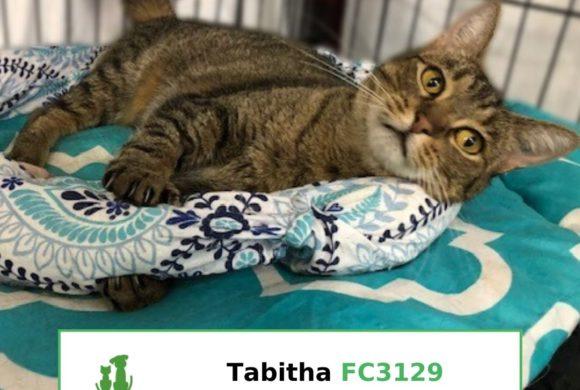 Tabitha (Adopted)