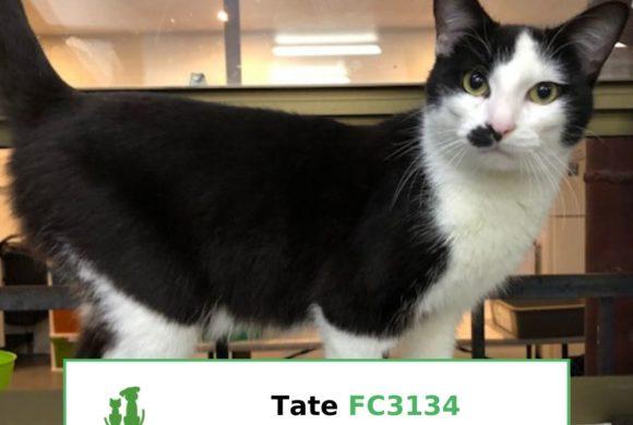 Tate (Adopted)