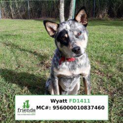 Wyatt (On Trial)