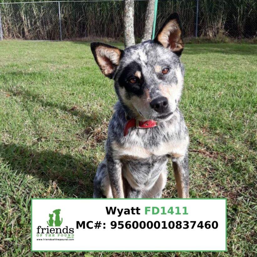 Wyatt (Adopted)