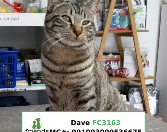 Dave (Adopted)