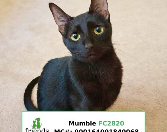 Mumble (Adopted)