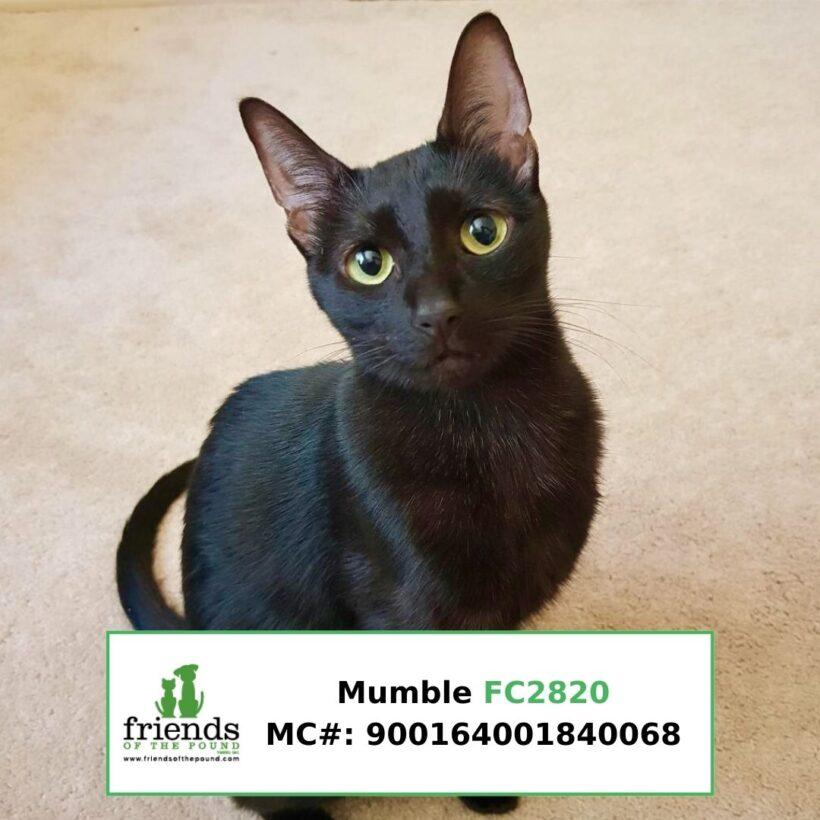 Mumble (Adopted)