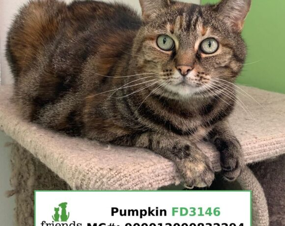 Pumpkin (Adopted)