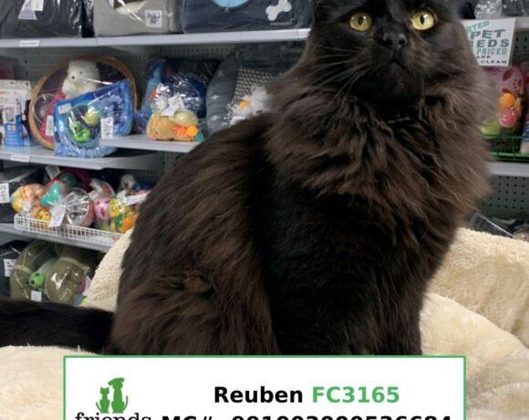 Reuben (Adopted)