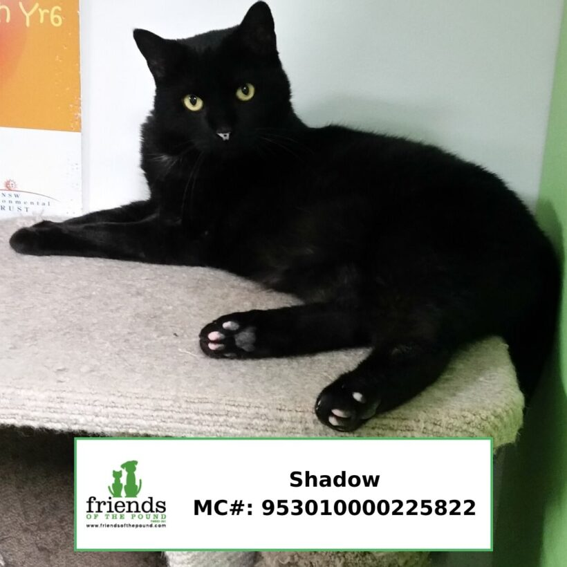 Shadow (Adopted)