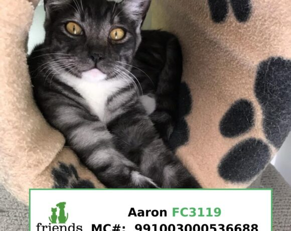 Aaron (Adopted)