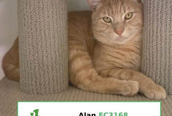 Alan (Adopted)