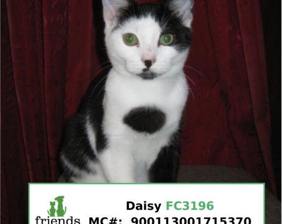 Daisy (Adopted)