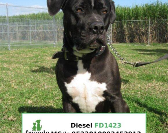Diesel (Adopted)
