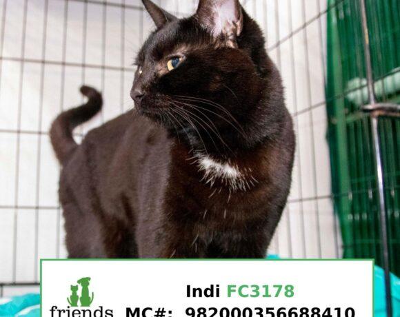 Indi (Adopted)