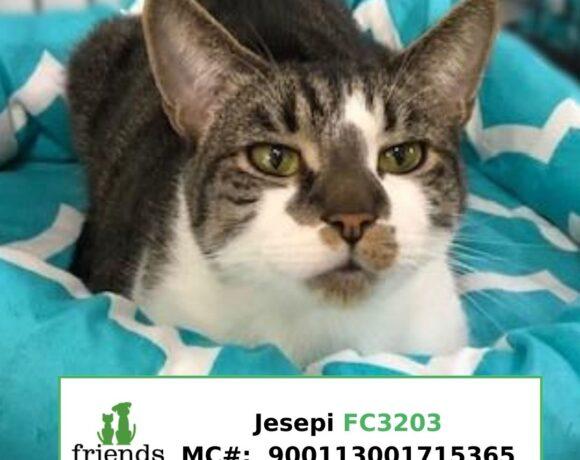 Jesepi (Adopted)