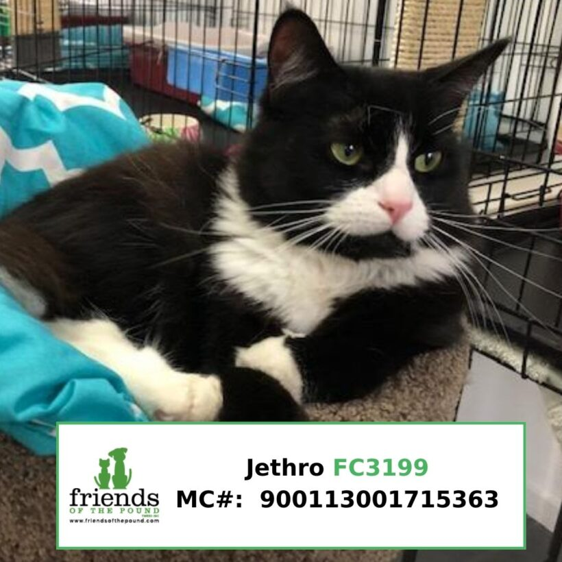 Jethro (Adopted)