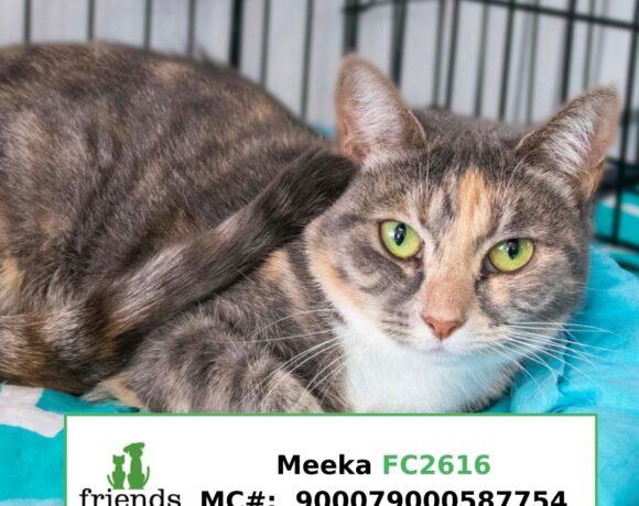 Meeka aka Bunnie