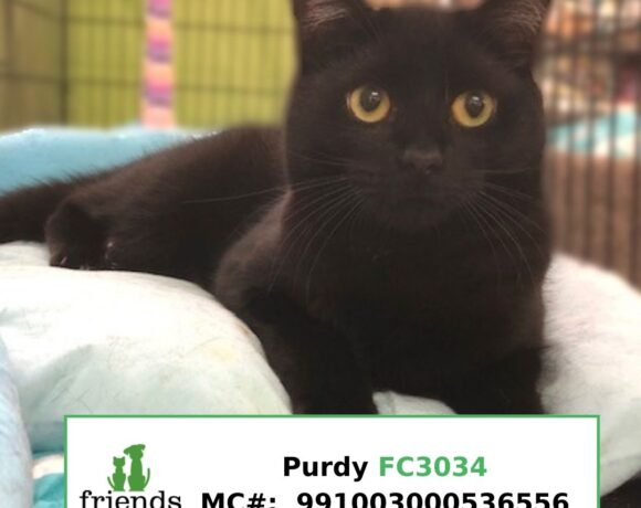 Purdy (Adopted)