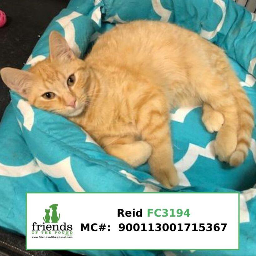 Reid (Adopted)