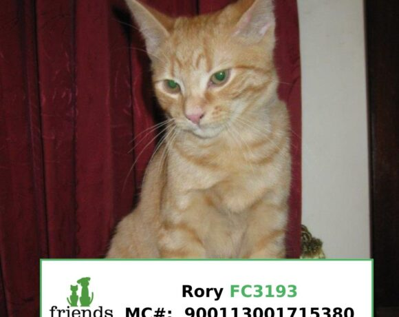 Rory (Adopted)
