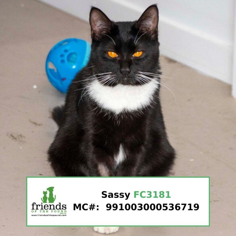 Sassy (Adopted)
