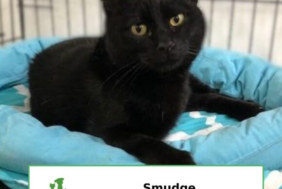 Smudge (Adopted)