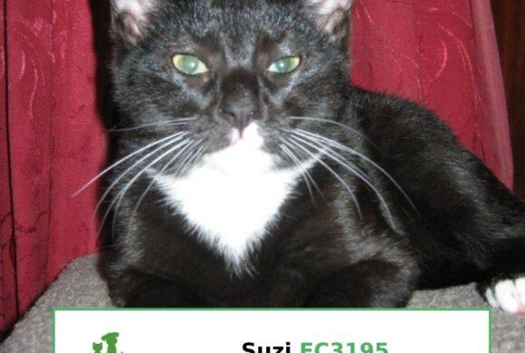 Suzi (Adopted)