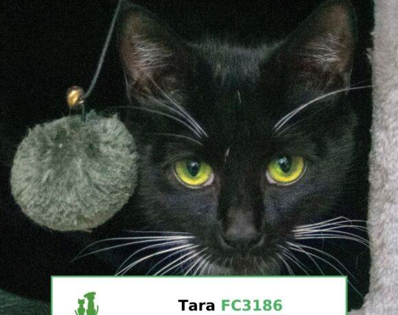 Tara (Adopted)