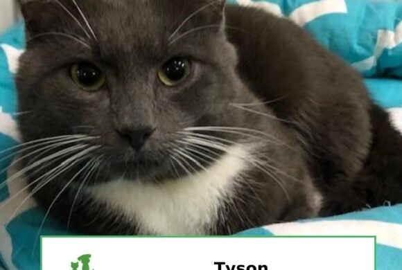 Tyson (Adopted)