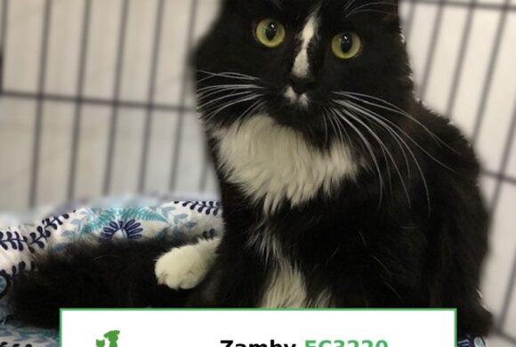 Zamby (Adopted)