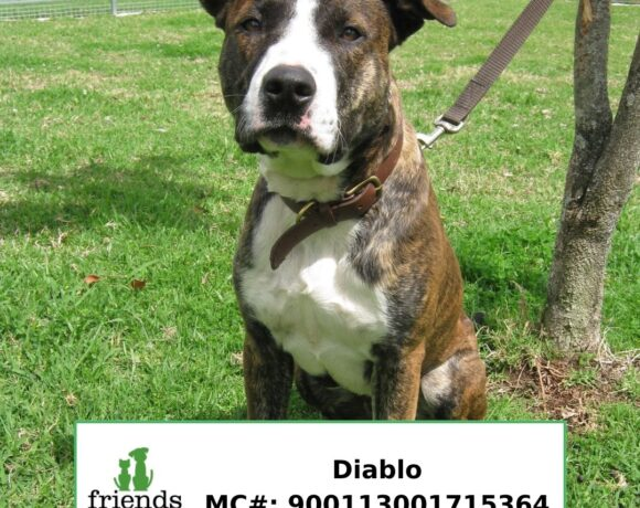 Diablo (Adopted)