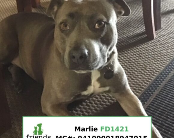 Marlie (Adopted)