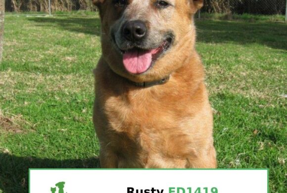 Rusty (Adopted)