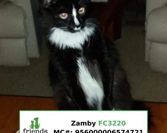 Zamby