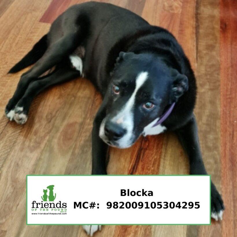 Blocka (Adopted)