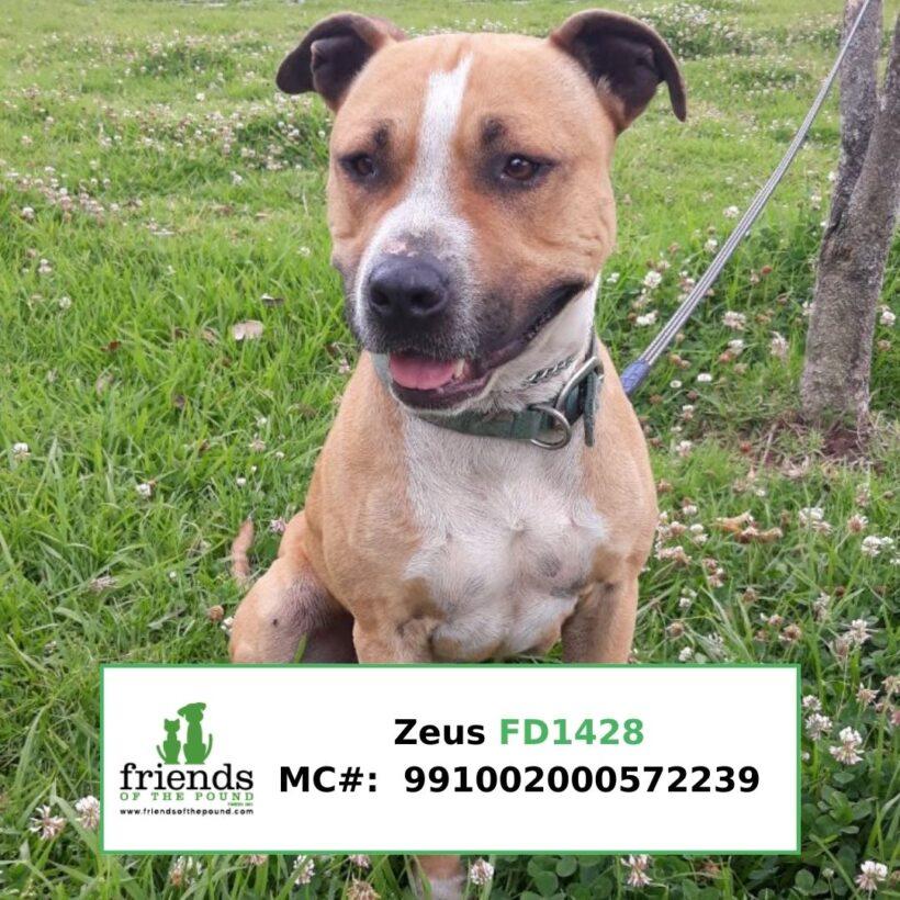 Zeus (Adopted)