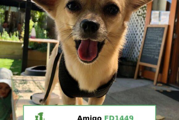 Amigo (Adopted)
