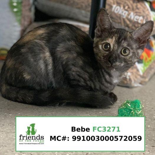 Bebe (Adopted)
