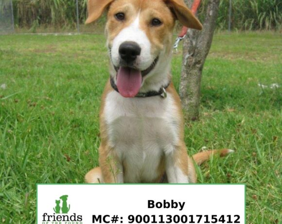 Bobby (Adopted)