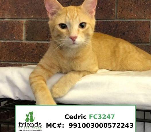 Cedric (Adopted)