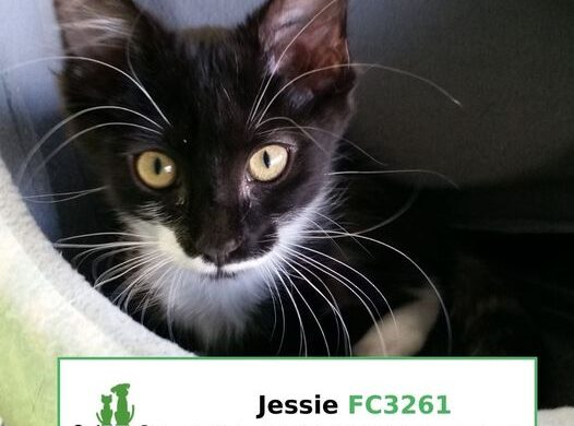 Jessie (Adopted)