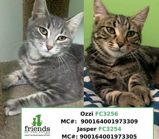 Jasper & Ozzi (Adopted)