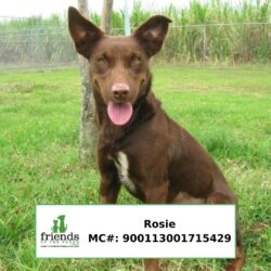 Rosie (Adopted)