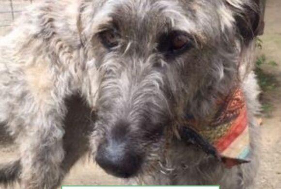 Freya (Adopted)