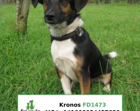 Kronos (Adopted)