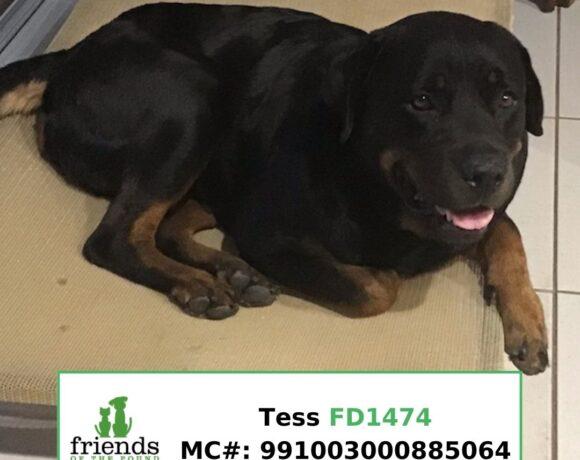 Tess (Adopted)