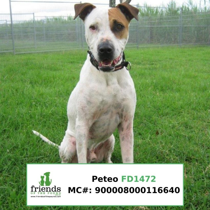 Peteo (Adopted)