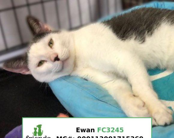 Ewan (Adopted)