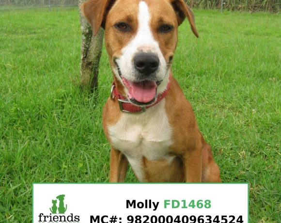 Molly (Adopted)